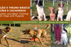 Education and basic training of dogs and puppies